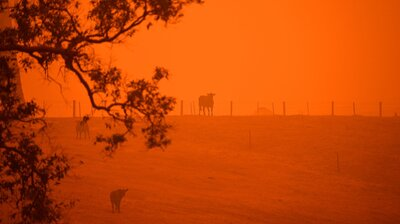 What's Behind Australia's Historic Fires