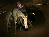 A Palestinian citizen getting a sheep through a tunnel (NPR, AFP/Getty Images)