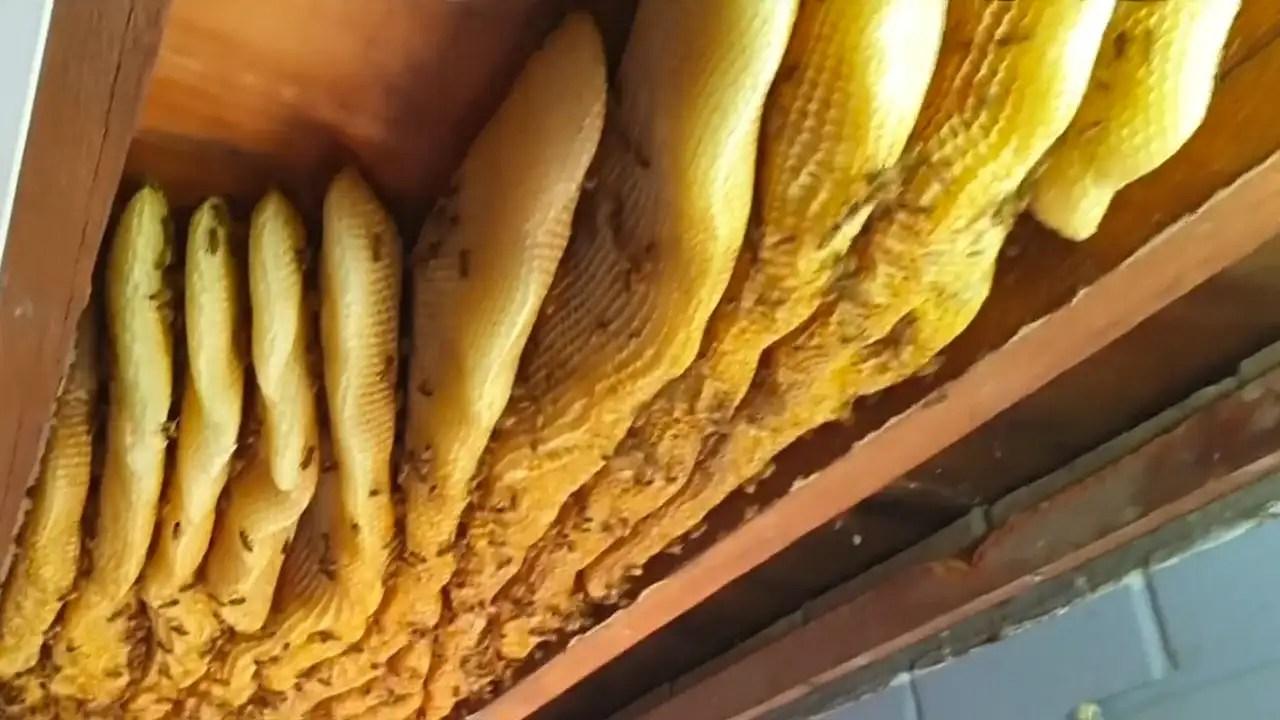beekeeper removes 60 000