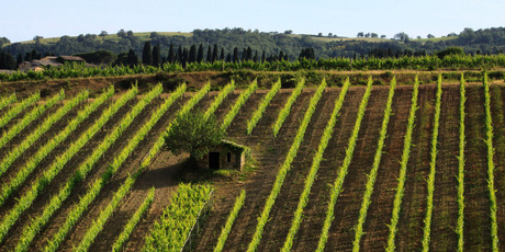 Splendid isolation: The Tuscan countryside between Montalcino and Campiglia D'Orcia