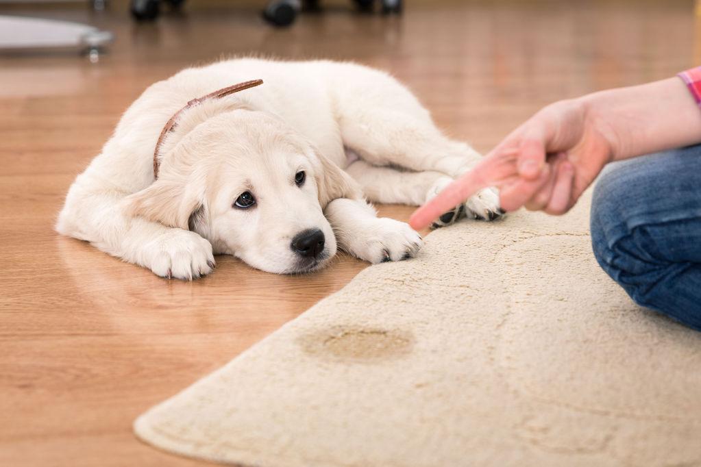 tapis absorbant pour chien definition