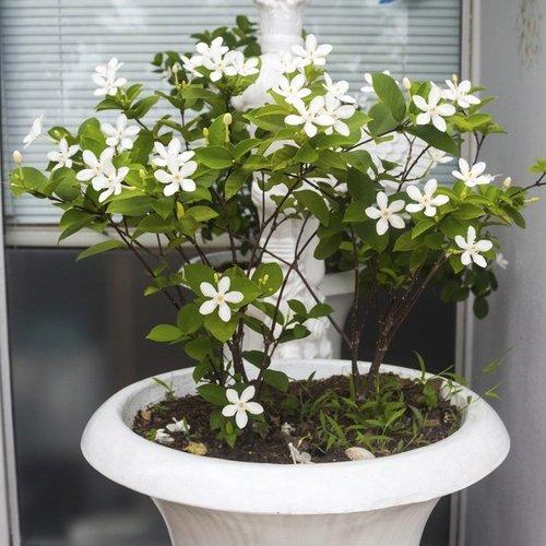 plante grimpante d interieur liste