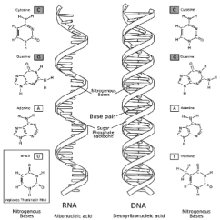 Dna Diagram Worksheet Of A Hurricane With Labels Coloring Labeled Pages