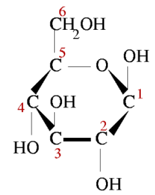 Energy for Life: An Overview of Photosynthesis