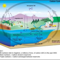 Water Ecosystem Diagram 500 Watt Audio Amplifier Circuit Recycling Matter In Ecosystems  Opencurriculum