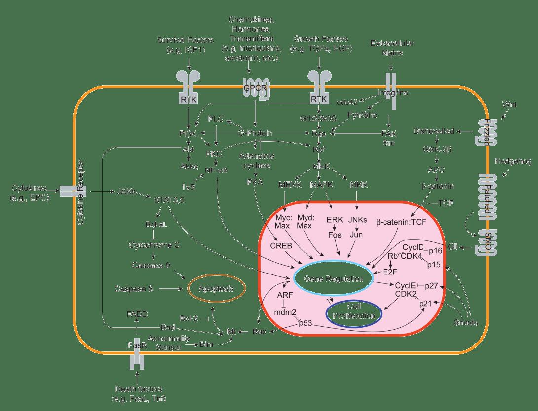 Regulation Of Gene Expression Opencurriculum