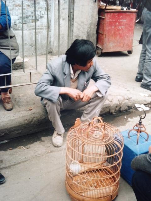 fågelbur china