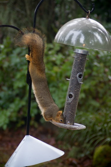 Weekly tip Feed the birds outfox the squirrel