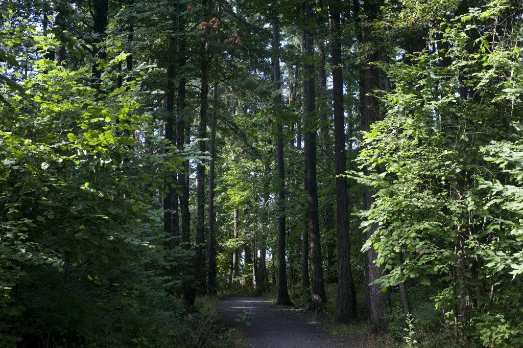 pacific northwest trees names