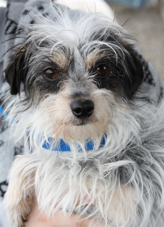Hillsboro animal shelter prepares 17 small dogs for adoption  OregonLivecom