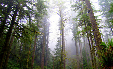 Elliott State Forest sale: Timber, threatened species and politics collide