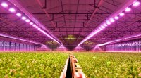 LEDs for Horticulture and Agriculture Lighting | OSRAM ...