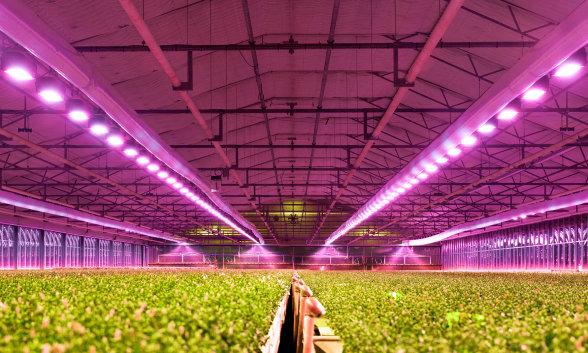 Luz e iluminacin para todas las aplicaciones importantes