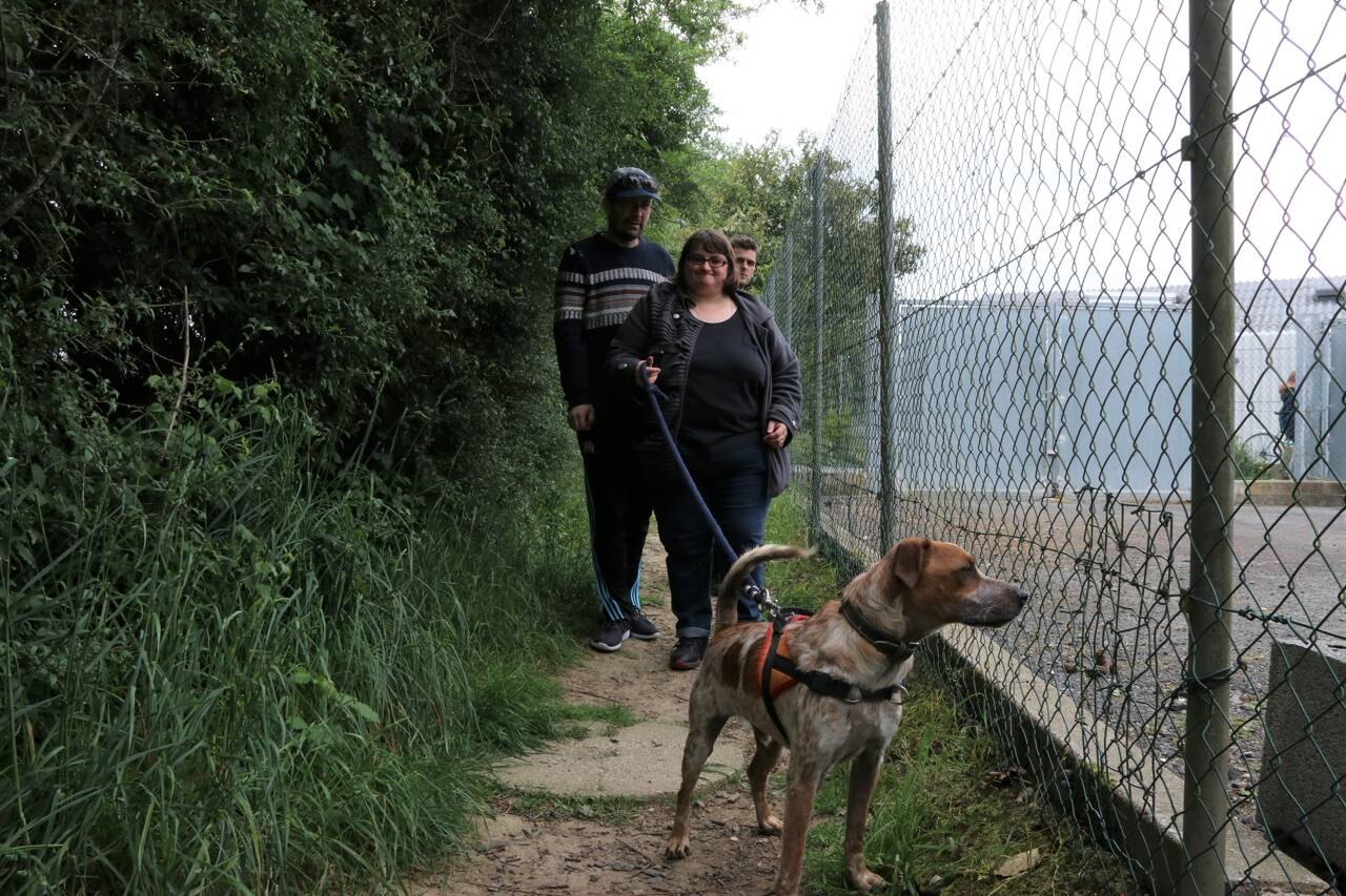 cholet 120 animaux a adopter a la spa