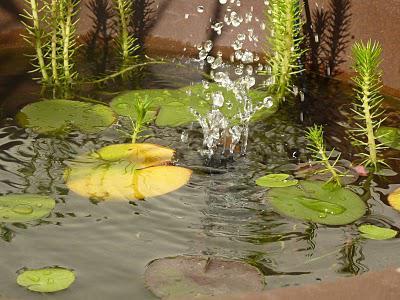 DIY  fabriquer un mini bassin aquatique   Voir