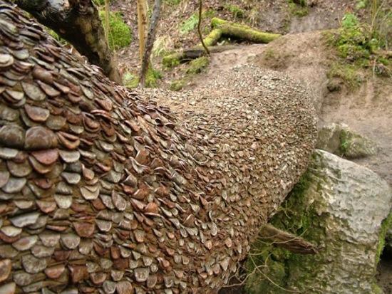L'étrange coutume des arbres à monnaie - 2