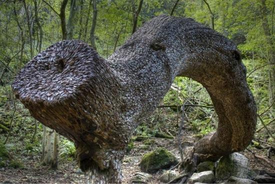 L'étrange coutume des arbres à monnaie