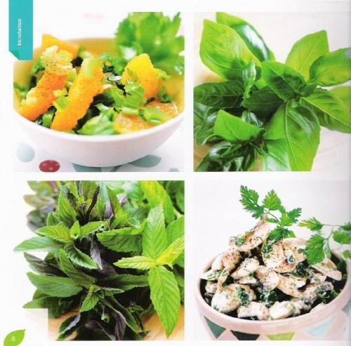 Les Herbes Aromatiques En Cuisine