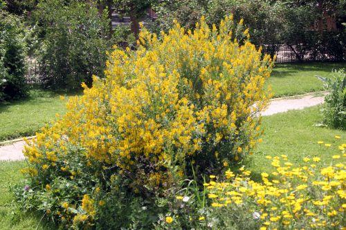 Un beau jardin jaune   Dcouvrir