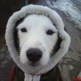 Min eskimå-parson Caspian