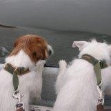 Mina båtälskande parsons Blanka & Digger