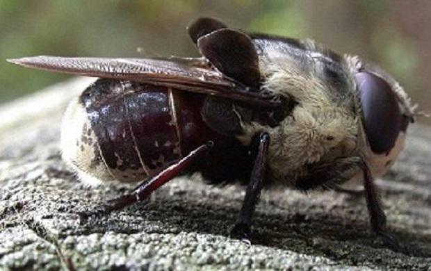8 έντομα που ΔΕΝ θέλεις να συναντήσεις