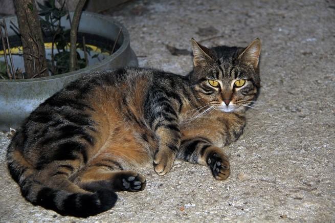 Gatto con forfora  Cause  Cosa fare