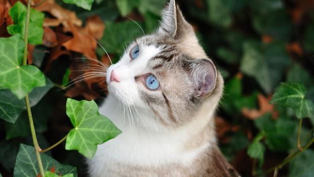 Poesie autunnali sui gatti  Il gattino e le foglie che