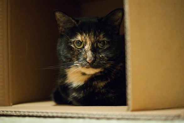 Regali di Natale per gatti la scatola delle ricompense in