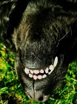 Barzellette sui cani vi piacciono