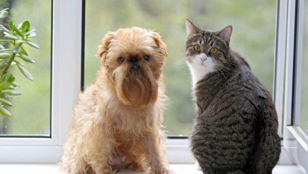 Pulire peli cane e gatto in casa