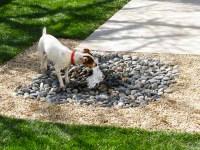 Garden Ideas For Dogs - Native Home Garden Design