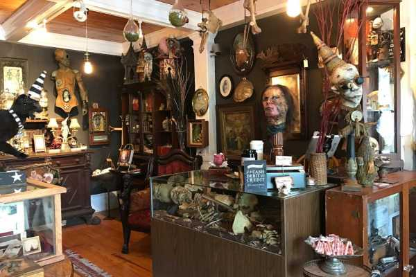 Philly-area Antique Malls Taxidermy And