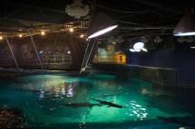 Adventure Aquarium Camden Shark Bridge
