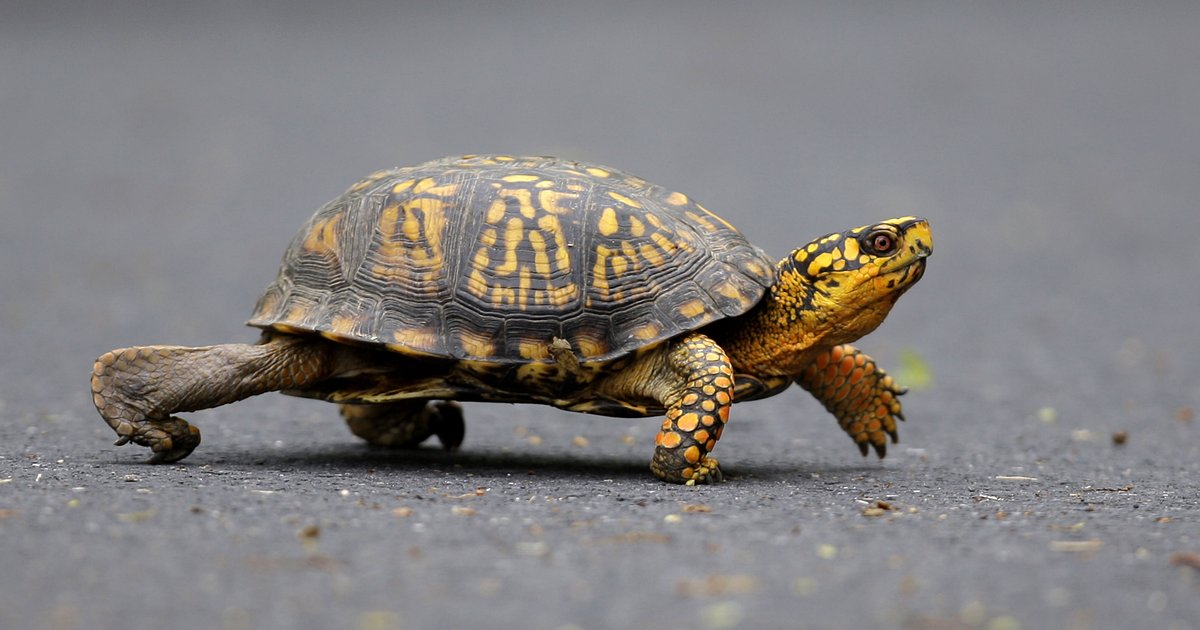NJ Man Pleads Guilty To Selling Rare Species Of Turtles