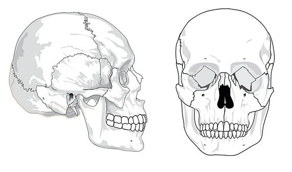 unlabeled skull diagram inferior view 2006 club car precedent electric golf cart wiring cranial bones diagrams mind medical drawing health frames rh pixcove com cranium of the human