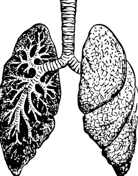 Lungs, Structure, Diagram, Drawing, Organ, Chest, Human