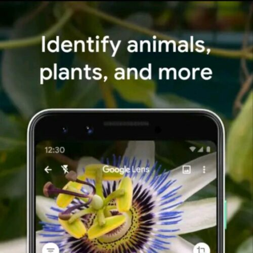 Best free plant identification apps for Android