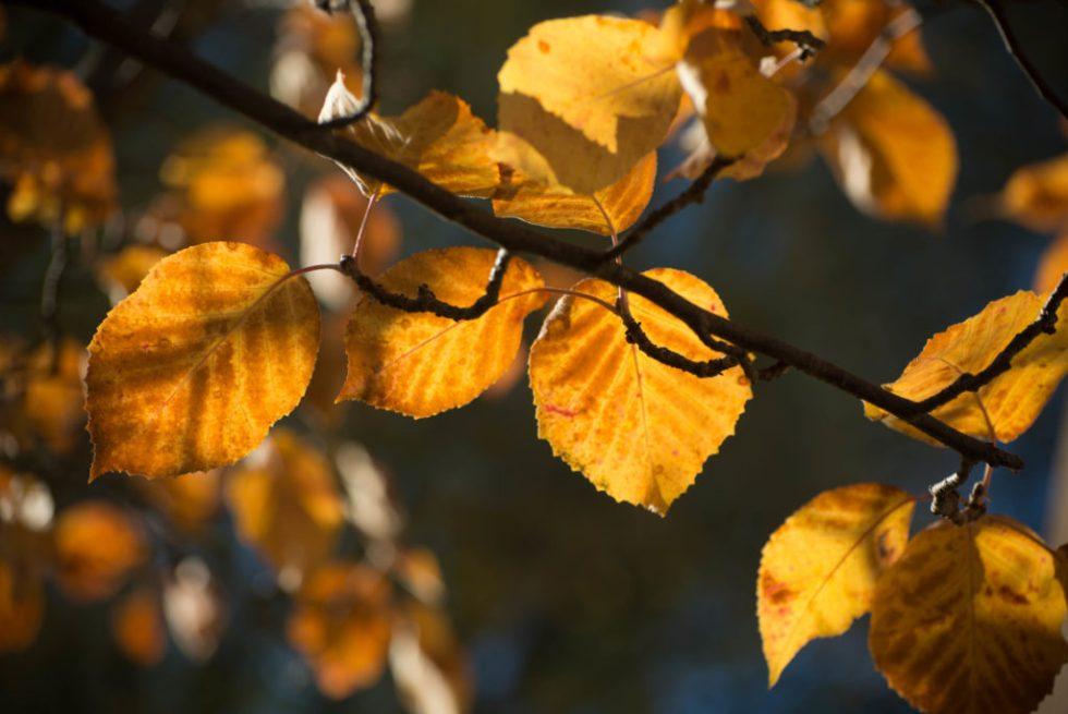236-leaf-6