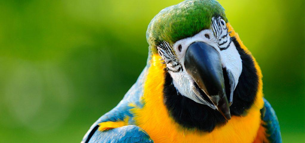 birds archives pluspets