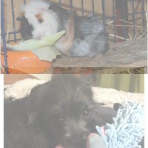 Hund/Katt/Smådjur