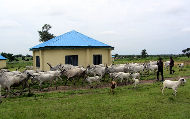 The primary school in Bobi grazing reserve