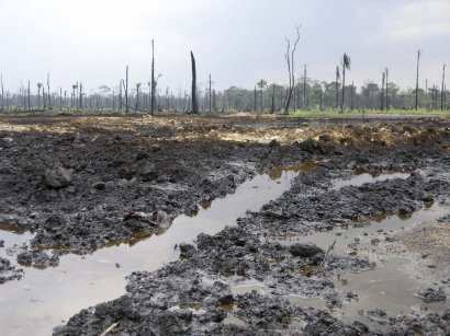 Oil Polluted Field
