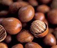 Shea Butter nuts [Photo: the-ibenefits.com]