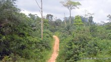 A patch of forest in Akamkpa, Cross River State. The state holds over half of Nigeria's standing rainforest