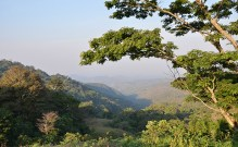 Ngel Nyaki Forest Reserve [Photo Credit: Nigerian Montane Forest Project]