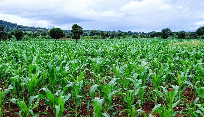Image result for farms in north east nigeria