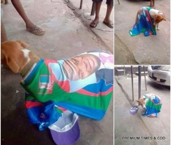 A dog used to campaign for APC.