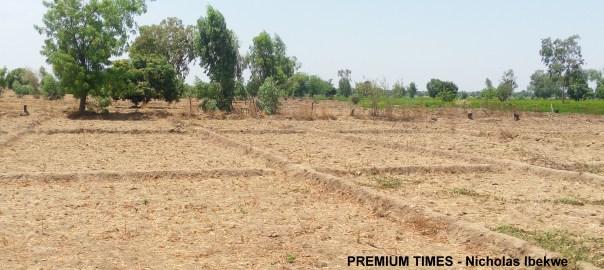 Abandoned farmland 1