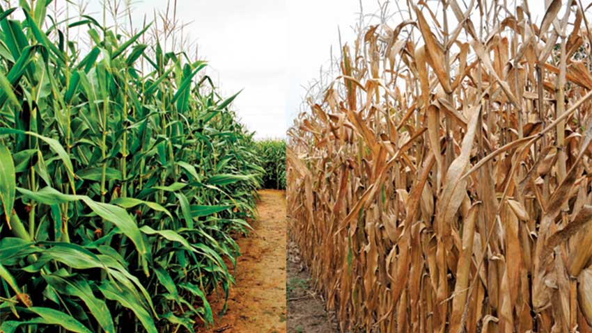 Climate-change-in-agriculture